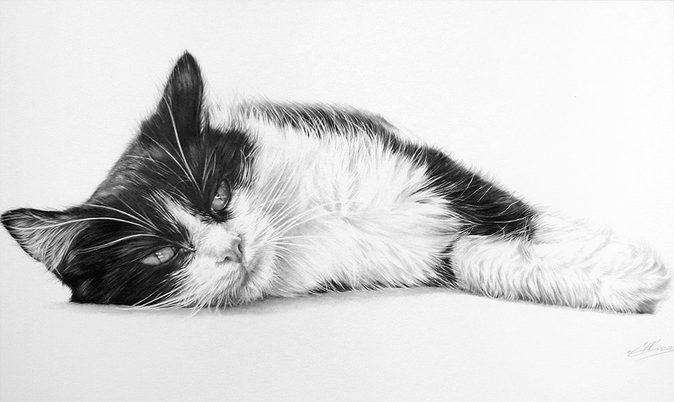 Lazy Days by Maria Brown - Your Cat?