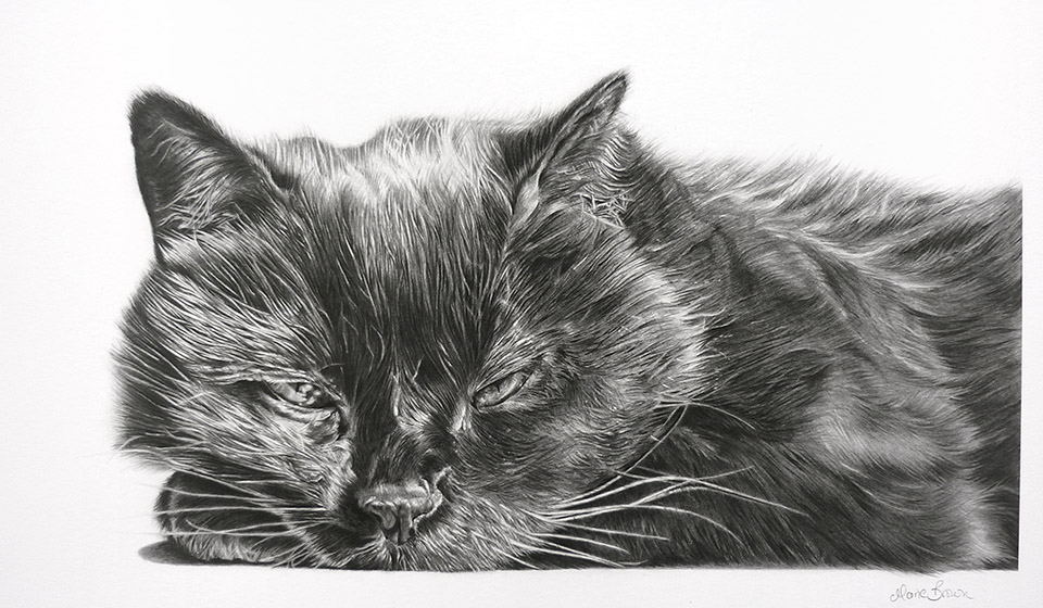Monty by Maria Brown - Your Cat?