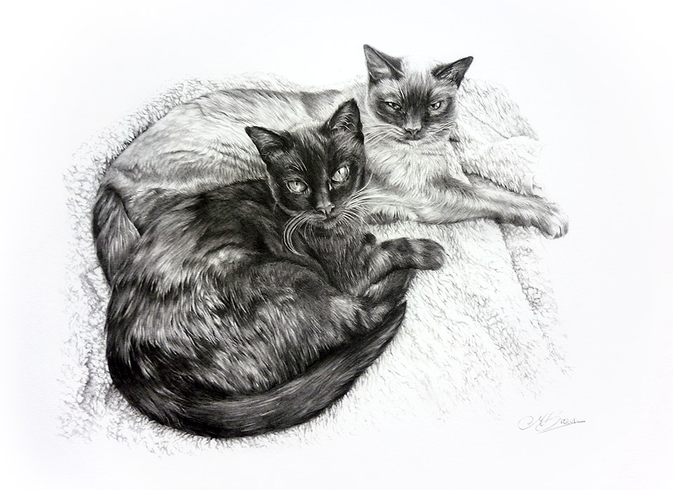 Saff and Cass by Maria Brown - Your Cat?