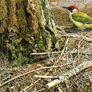 Green Woodpecker by Terance James Bond