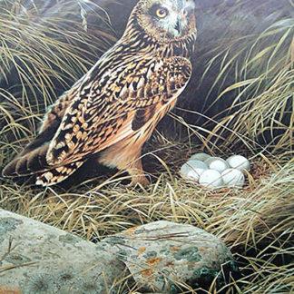 Short-Eared Owl by Terance James Bond