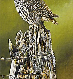 Little Owl by Terance James Bond