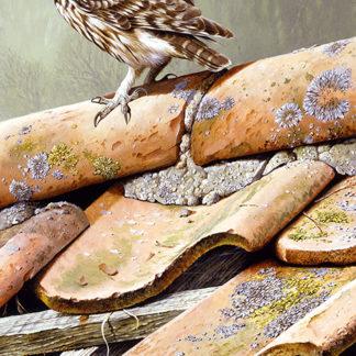 Little Owl (On The Tiles) by Terance James Bond