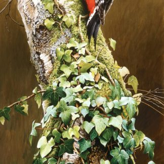 Great Spotted Woodpecker by Terance James Bond