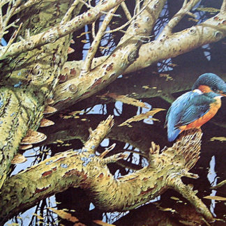Kingfisher by Terance James Bond