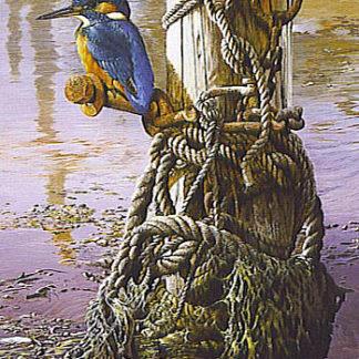Kingfisher by Terance James Bond