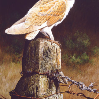 Barn Owl (Evening Watch) by Terance James Bond