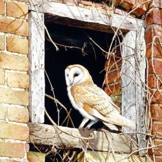 Barn Owl (In The Frame) by Terance James Bond