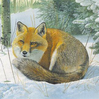 Snowfox by Kenneth Smith