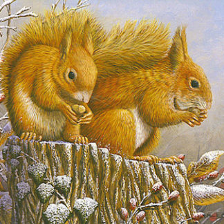 Red Squirrel by Mark Chester
