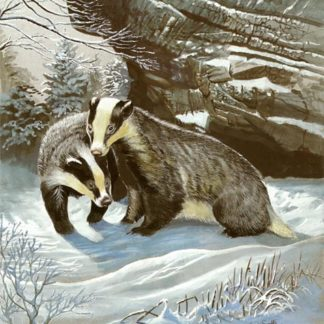 Badgers Bluff by Kenneth Smith