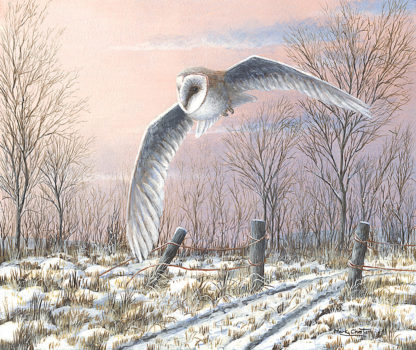 Winter Evening (Barn Owl) by Mark Chester