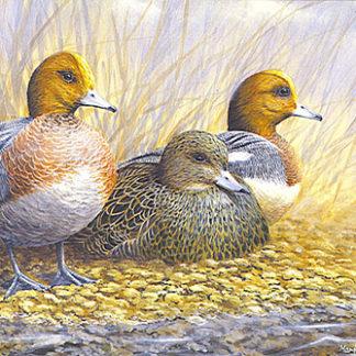 Notelet Pack 1 - Ducks