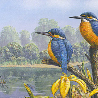 Notelet Pack 2 - Summer Kingfishers