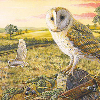 Notelet Pack 3 - Barn Owl