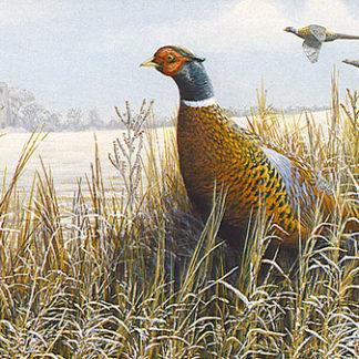 Pheasant in a Winter Landscape