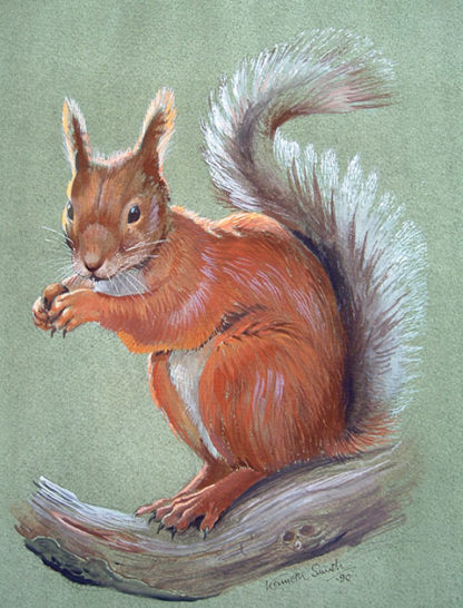 Red Squirrel by Kenneth Smith