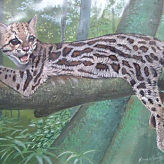 Margay by Kenneth Smith