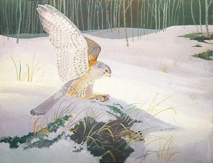 Hunting Kestrel by Kenneth Smith