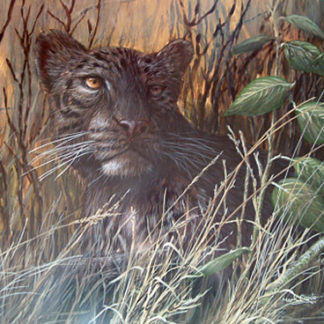 Black Leopard by Mark Chester