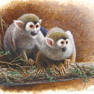 Squirrel Monkey Study by Mark Chester