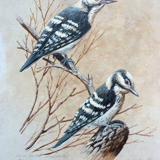 Lesser Spotted Woodpeckers by Mark Chester