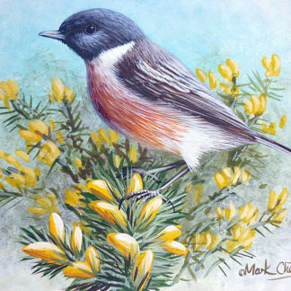Stonechat by Mark Chester
