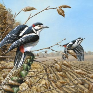 Woodland Edge (Great Spotted Woodpeckers) by Mark Chester