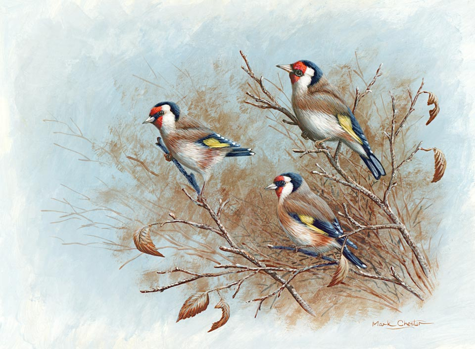 Autumn Goldfinches by Mark Chester