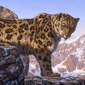 Top of the World (Snow Leopard)