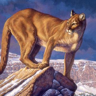 Winter Canyon (Cougar)