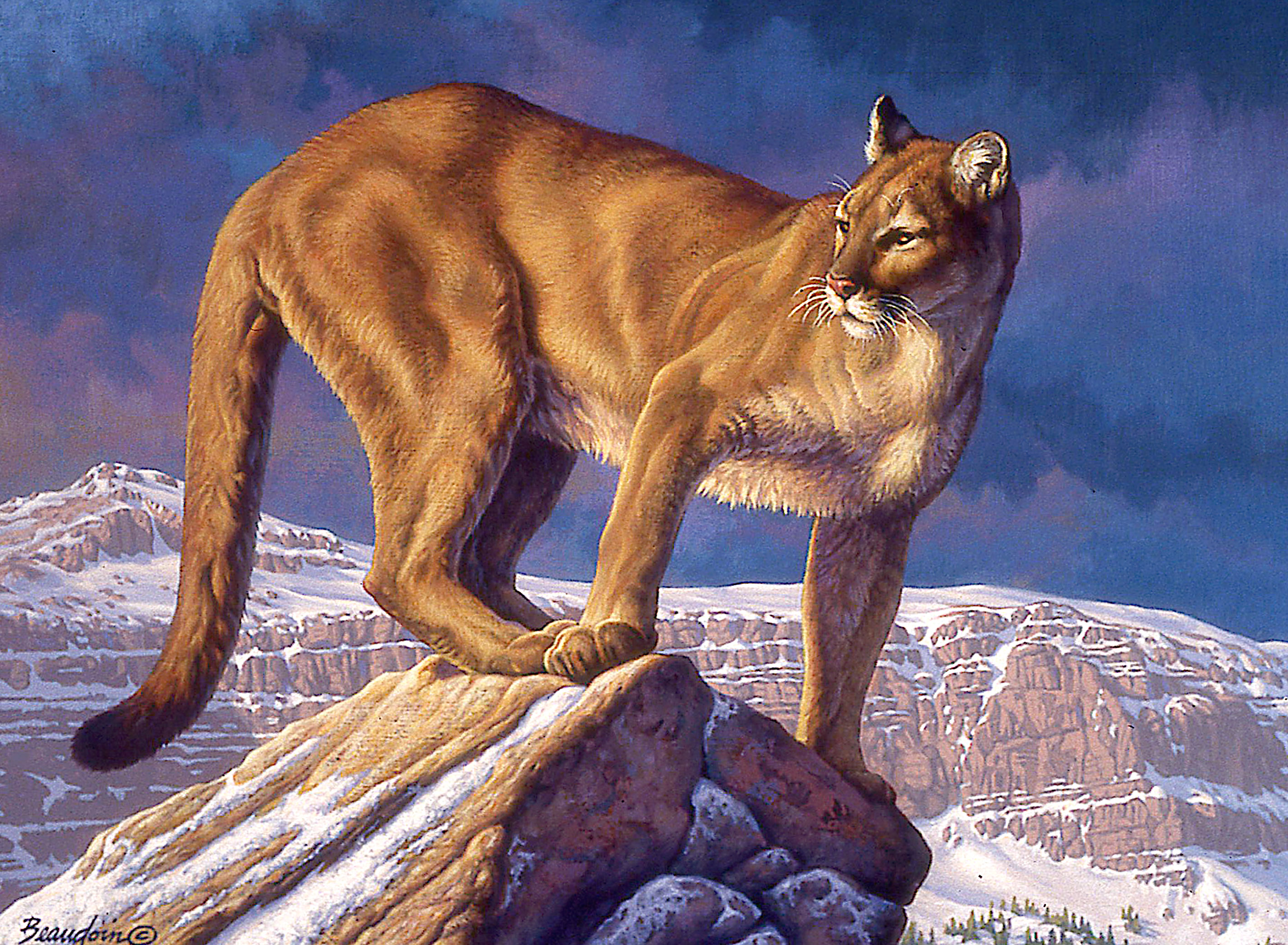 Winter Canyon (Cougar)