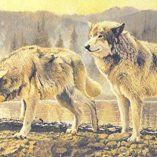 Misty Morning Wolves
