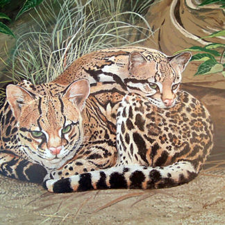 Ocelot Pair by Kenneth Smith