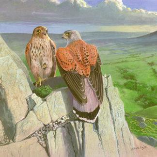 Kestrels Crag