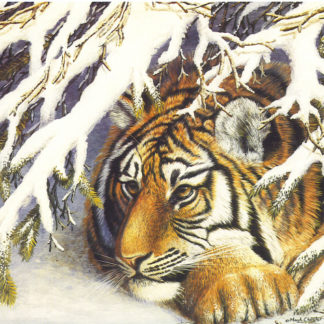 Tiger 6 by Mark Chester
