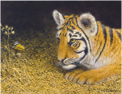 Tiger 3 by Mark Chester