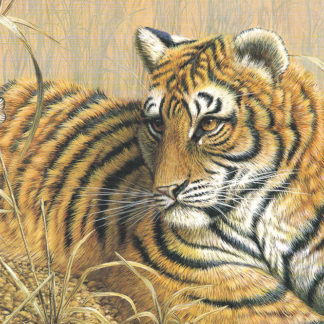Summer Tiger by Mark Chester