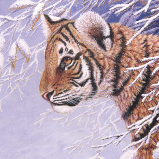 Winter Tiger by Mark Chester
