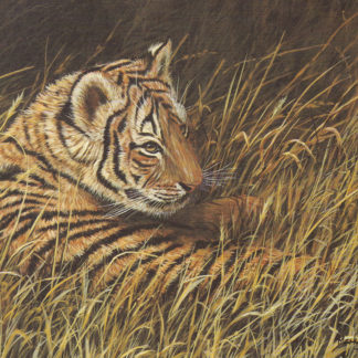 Resting Tiger Cub by Mark Chester