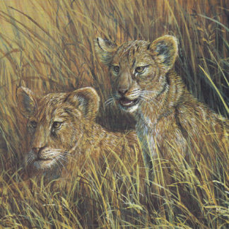 Lion Cubs by Mark Chester