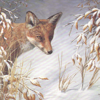 Fox by Mark Chester