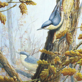 Nuthatches by Mark Chester