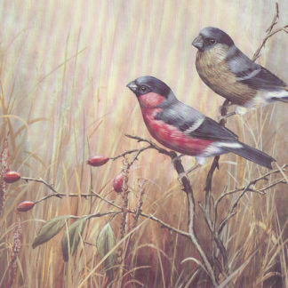 Bullfinches by Mark Chester