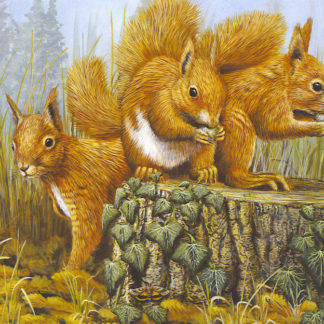 Red Squirrel Trio by Mark Chester