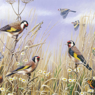 Summer Goldfinches by Mark Chester