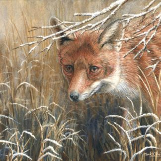 Frosty Morning - Winter Fox by Mark Chester