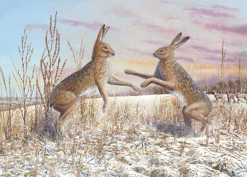 Boxing Hares by Mark Chester