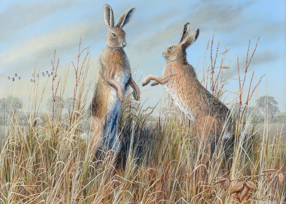 Boxing Hares 2010 by Mark Chester
